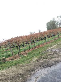 hlwhaag_weinexperience048